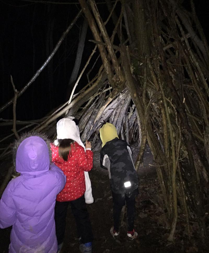Woodland camp at night
