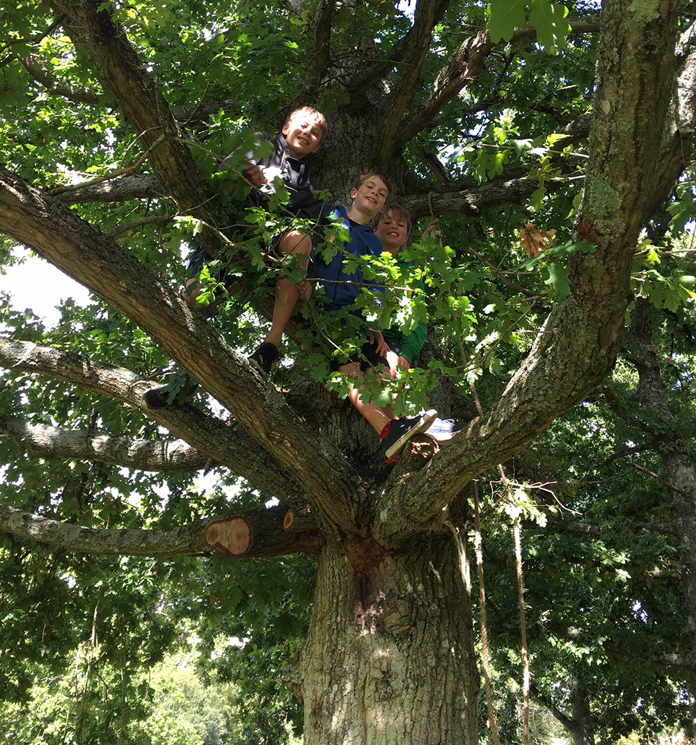 Now On Earth Travel Focus: Fun Family Tree Festivals