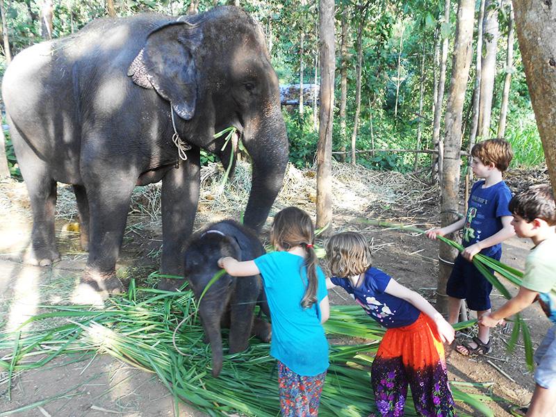 Meeting elephants near Chiang Mai