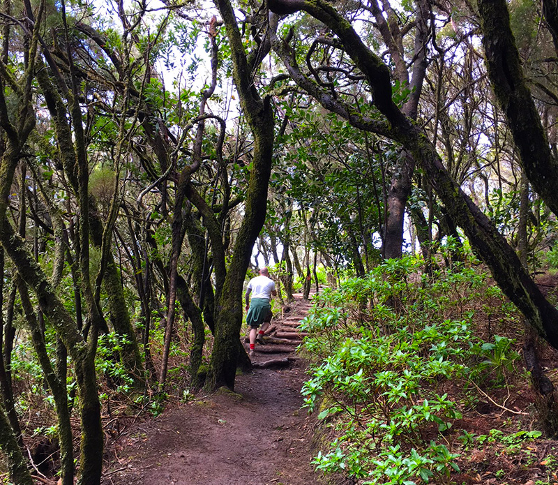 Hiking through the forests on La Gomera