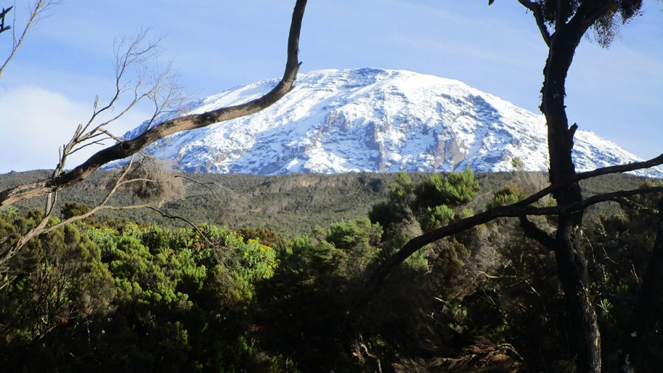 Kilimanjaro - on the way