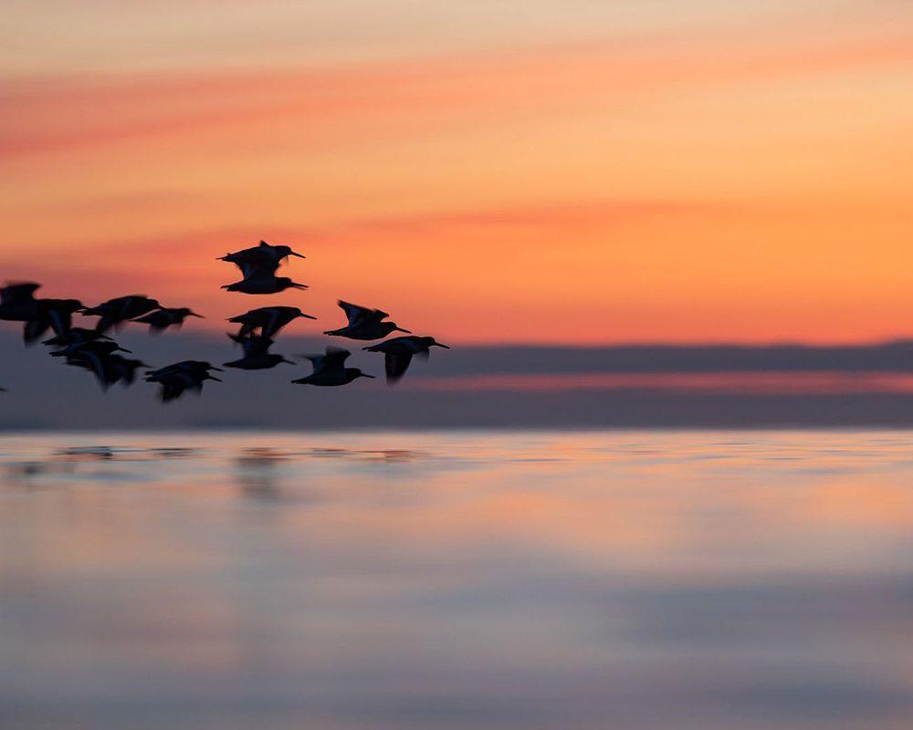 Birds at dawn