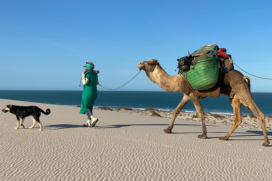 Alice Morrison leading camels in Morocco